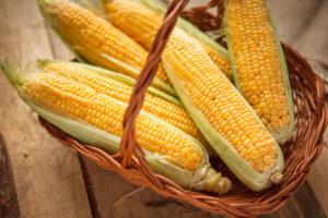 как варить кукурузу2