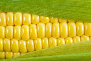 как варить кукурузу3