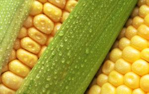 как варить кукурузу6