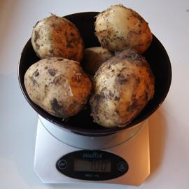 Сколько варить картошку1